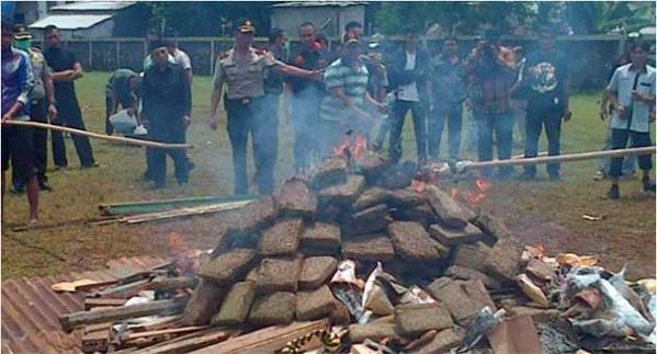 Police In Indonesia Burn 3.3Tons Of Marijuana & Get the Entire Town High