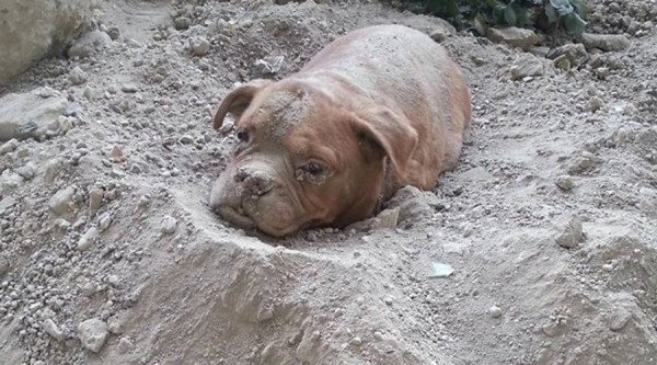 Dog Found Burried Alive Triggers An Outcry & Petition For The Owner To Be Punished To The Fullest Extent Of The Law