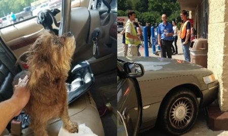 After Woman Leaves Dogs In Car, They Managed To Crash The Car Into Walmart