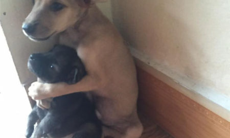 Total Cuteness!!! Two Rescued Puppies Can't Stop Hugging Each Other