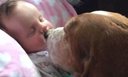 Baby Suffers Fatal Stroke & Family Dogs Would Not Leave Baby's Side