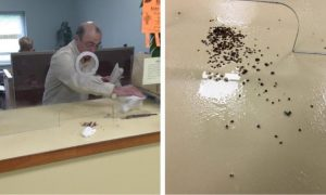 angry-man-denied-assistance-releases-100-bed-bugs-in-city-office_1