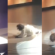 Watch: Talk Show Phenom Oprah Winfrey Takes A Big Tumble On Stage and Feet Were In The Air